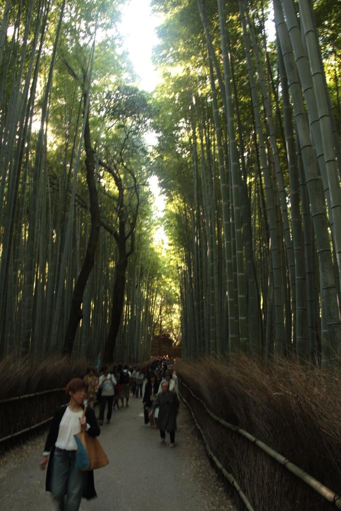 Tenryu-ji's Bamboo garden